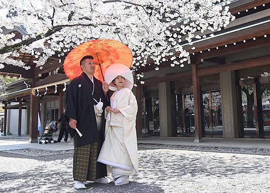 夜桜Wedding